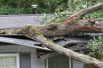 Fallen Tree Restoration by Kentucky Disaster Restoration, LLC